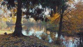 Bosque septentrional severo en un día soleado del otoño Forest Lake metrajes