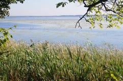 Bosque, septiembre, río, cañas y ondas fotos de archivo