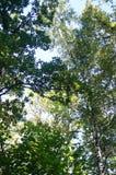 Bosque, septiembre, roble, álamo, camino imagenes de archivo