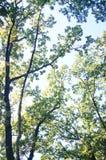 Bosque, septiembre, roble, álamo, camino fotos de archivo