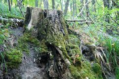 Bosque, septiembre, roble, álamo, camino imagen de archivo