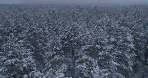 Bosque siberiano del invierno, Rusia, taiga almacen de video
