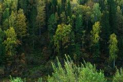 Bosque siberiano denso Imágenes de archivo libres de regalías