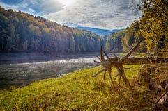 Bosque siberiano en otoño foto de archivo