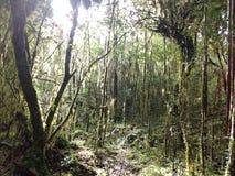 Bosque siempreverde Arkivbild