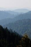 Bosque sin fin de la secoya en California septentrional imagen de archivo