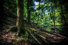 Bosque sin tocar Fotos de archivo