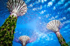 Bosque Singapura de Supertree - céu nebuloso azul foto de stock royalty free