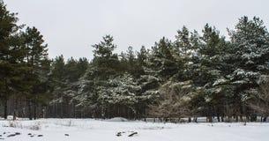 bosque sitiado por la nieve Imagen de archivo libre de regalías