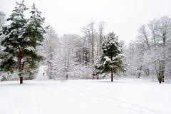 Bosque soleado brillante del pino cubierto con nieve en invierno Imágenes de archivo libres de regalías