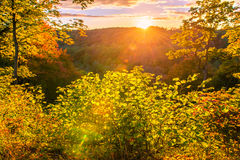 Bosque soleado de la caída Imágenes de archivo libres de regalías
