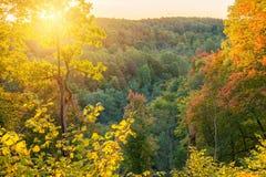 Bosque soleado de la caída Fotos de archivo libres de regalías