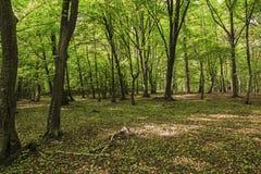 Bosque soleado de la primavera imagen de archivo