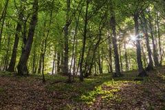 Bosque soleado de la primavera foto de archivo