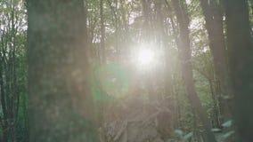 Bosque soleado del mediodía con madera cutted 4K almacen de metraje de vídeo