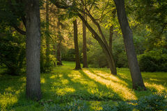 Bosque soleado por la tarde Imagenes de archivo
