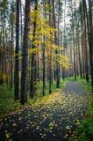 Bosque sombrío del otoño con la alfombra verde Fotografía de archivo libre de regalías