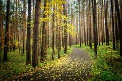 Bosque sombrío del otoño con la alfombra verde Imagen de archivo libre de regalías