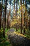 Bosque sombrío del otoño con la alfombra verde Fotografía de archivo