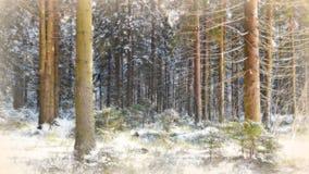 Bosque spruce del invierno Fotografía de archivo