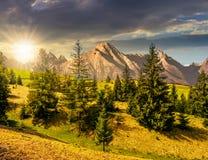 Bosque Spruce en la ladera herbosa en tatras en la puesta del sol Foto de archivo libre de regalías