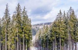 Bosque Spruce en las montañas cárpatas Vacaciones de invierno en las montañas cárpatas Fotos de archivo