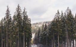 Bosque Spruce en las montañas cárpatas Vacaciones de invierno en las montañas cárpatas, Ucrania Foto de archivo