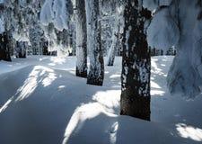 Bosque spruce nevoso del detalle Imagen de archivo libre de regalías