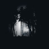 Bosque spruce oscuro en la noche Foto de archivo