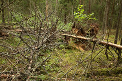 Bosque sucio Foto de archivo libre de regalías