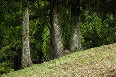 Bosque suizo del jardín de la granja de Cingjing el condado de Nantou pequeño Fotografía de archivo