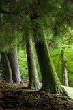 Bosque suizo del jardín de la granja de Cingjing el condado de Nantou pequeño Foto de archivo libre de regalías