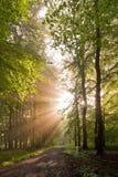 Bosque Sunlit Fotos de archivo libres de regalías