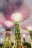 Bosque super da árvore em Singapura fotos de stock royalty free