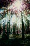 Bosque surrealista del pino imagenes de archivo