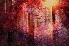 Bosque surrealista del pino fotos de archivo libres de regalías