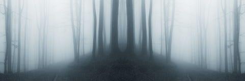 Bosque surrealista simétrico con niebla imágenes de archivo libres de regalías