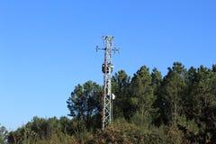 Bosque típico en Galicia fotografía de archivo