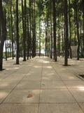 Bosque telhado no parque de Kuala Lumpur/DBKL Fotografia de Stock