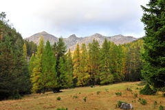 Bosque templado del parque nacional suizo Imagenes de archivo