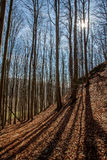 Bosque temprano de la primavera Foto de archivo