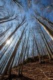 Bosque temprano de la primavera Imagenes de archivo
