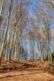 Bosque temprano de la primavera Fotografía de archivo libre de regalías