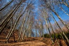 Bosque temprano de la primavera Imagen de archivo