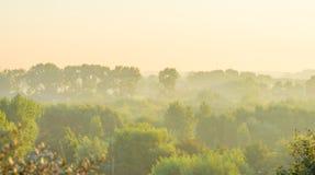 Bosque teniendo en cuenta salida del sol Fotos de archivo libres de regalías