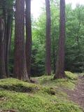 Bosque tranquilo Fotografía de archivo libre de regalías
