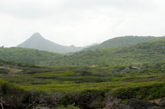Bosque tropical fotos de archivo