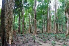 Bosque tropical Imágenes de archivo libres de regalías