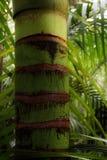 Bosque tropical Imagen de archivo libre de regalías