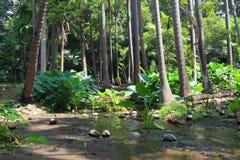 Bosque tropical Imagenes de archivo